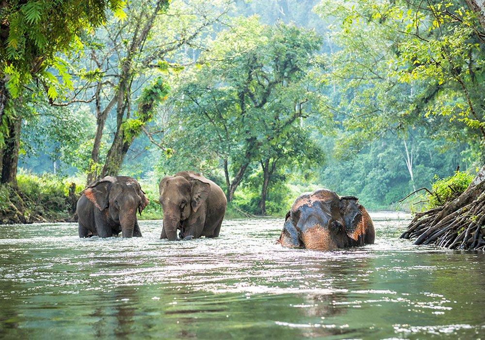 wildlife tour cambodia